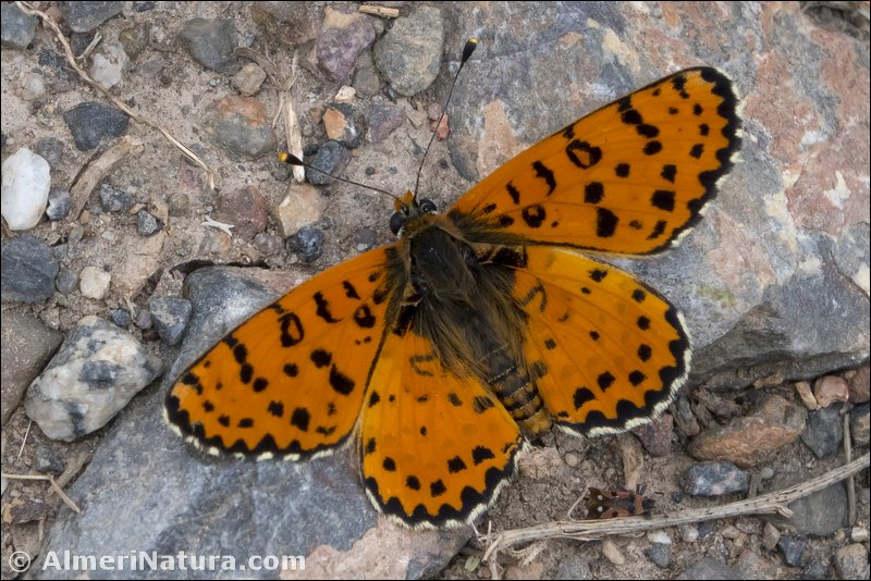 Gallery of Lepidoptera